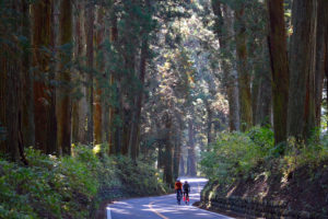 "Introduction introduction of ""Nikko Kinugawa"" area! The world famous heritage site is one of the best sightseeing spots in Kanto, also a cyclist welcome!"
