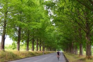 CWJ-LAKE BIWA04 Metasequoia Tree‐lined Road (Biwaichi additional route)