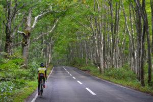 CWJ-AOMORI01 Hakkoda Kazumaru Through the Forest of Buna