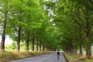 CWJ-LAKE BIWA04 Metasequoia Tree‐lined Road (Biwaichi additional route)